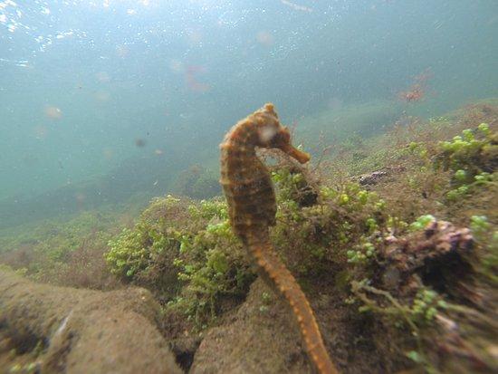 Пуерто-Вильямиль, Эквадор: CAballito en mar en Los Tuneles