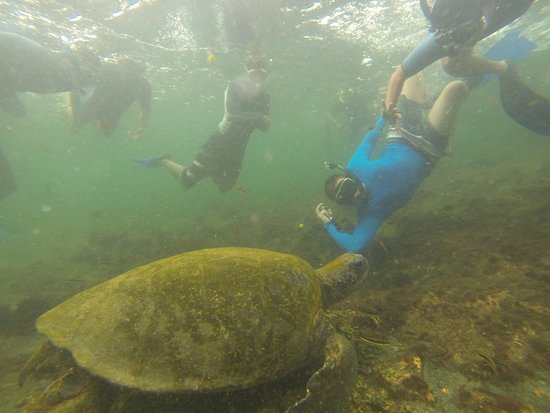 Puerto Villamil, Ecuador: Snorkeling con tortuga