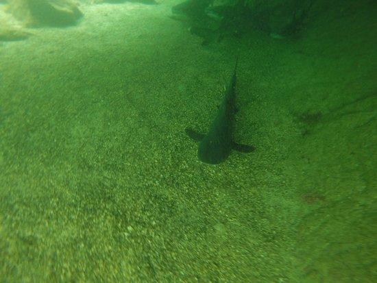 Puerto Villamil, Equador: Snorkeling con tiburoncin