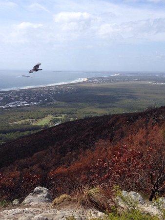 Coolum Beach, Australia: Climb to the top