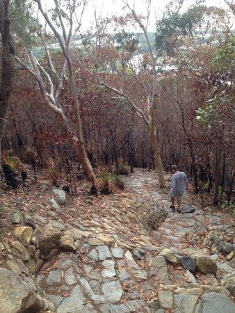 Mount Coolum: Climb to the top