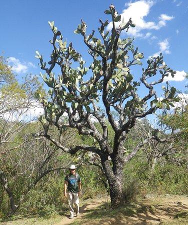 Salto Del Nogal Cactus Tree