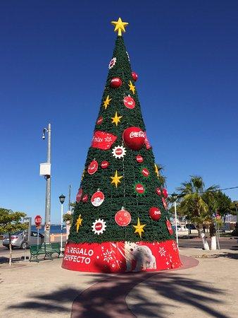 malecon o christmas tree