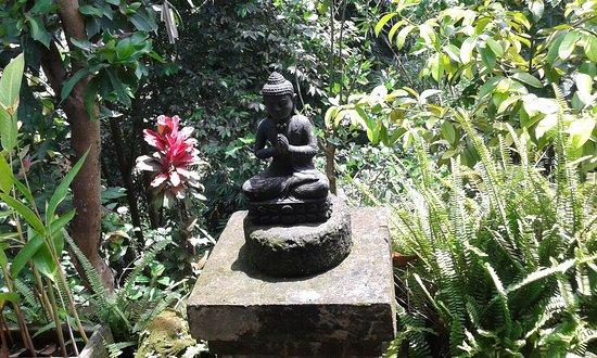 Tempat sepi .dekat dengan live yoga.dekat ubud central.green view.good breacfest.harga murah.