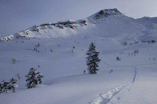 Kamifurano-cho, Japan: 三段山方面へ新雪に抱かれて。