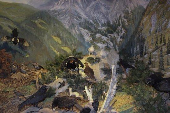 Sixenhof: la faune de montagne