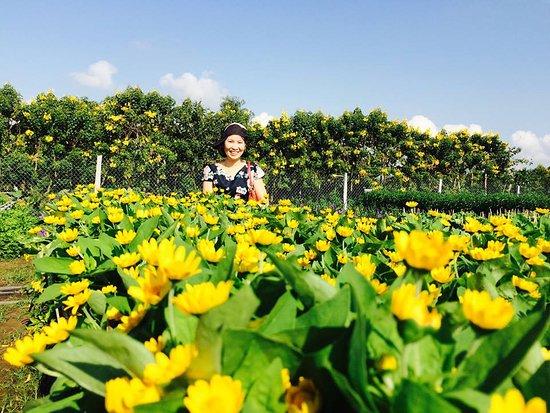 Sa Dec, Vietnam: Một ảnh trong Làng hoa Sadec vào dịp tết 2016