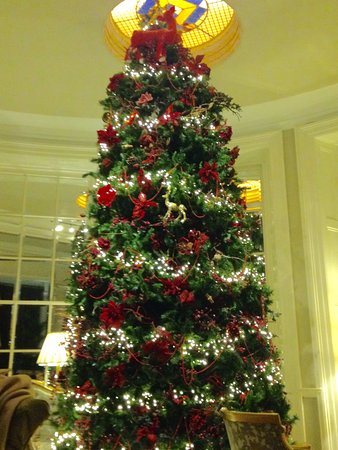 The Malton Hotel: This gorgeous tree was in the foyer