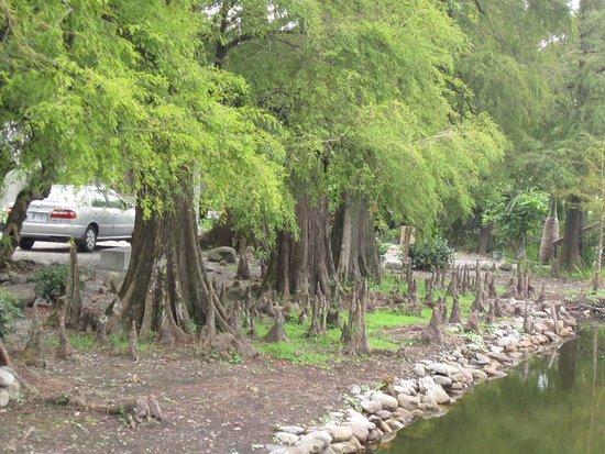 Chen's Pine Tree Garden