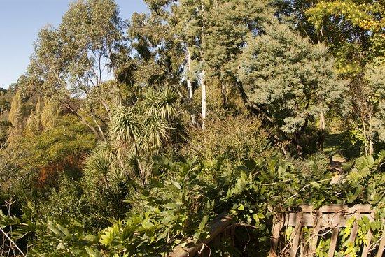 Urrugne, France : les essences botaniques du Wowpark