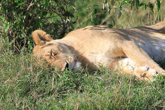 Eagle View, Mara Naboisho Aufnahme