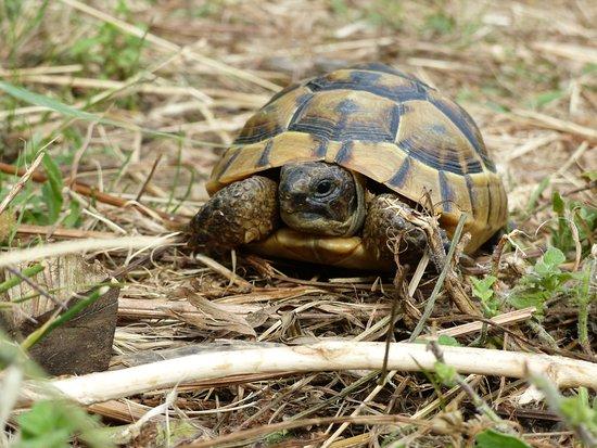 tortue ソレード la vallée des tortuesの写真 トリップアドバイザー