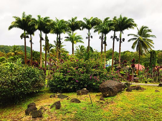 Le Jardin Malanga 이미지