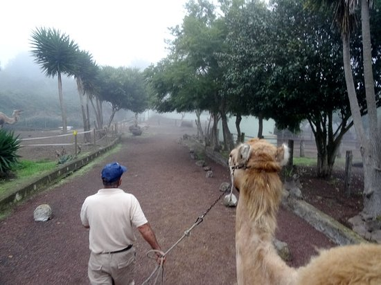 El Tanque, İspanya: Paseo de dromedario con la niebla acercandose.
