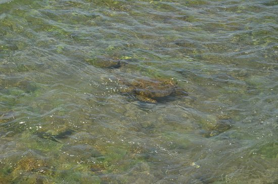 Pea Restobar : Tortuga vista desde la terraza.