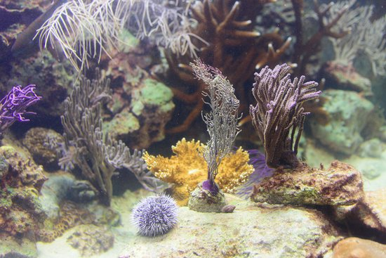 St. Lucie County Aquarium - Smithsonian Marine Ecosystems Exhibit: Coral reef