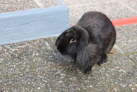 Hostal de La Rabida: Brownie the Bunny