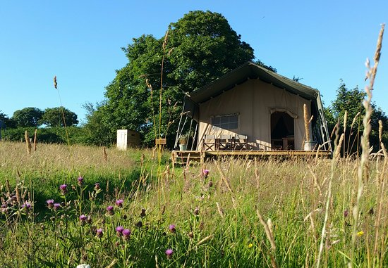Boncath, UK: Safari Lodge in the wildflower meadow