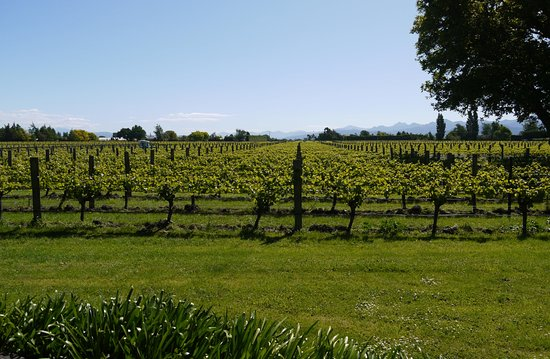 Walnut Block Cottages: View of vines from Cottage 1, Walnut Block