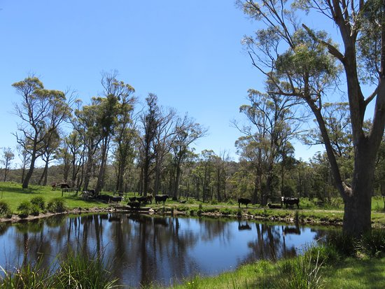 Platypus Park Country Retreat: Ponds