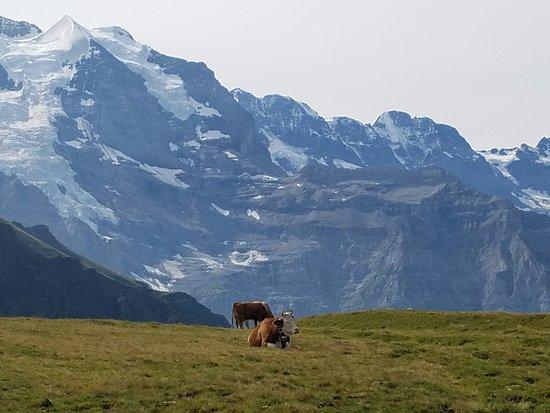 Grindelwald, Svizzera: Mannlichen