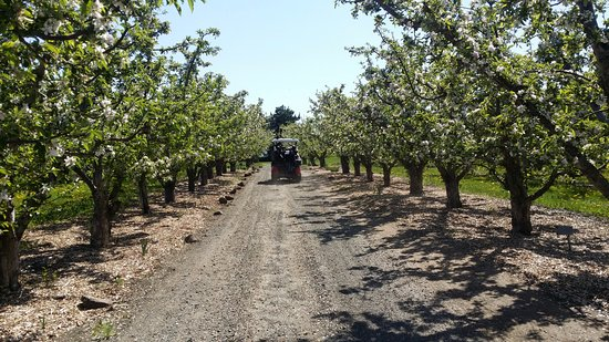 Yakima, WA: drive through the orchards between a few of the holes