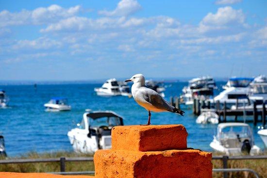 Warwick, Australia: Attraction near by