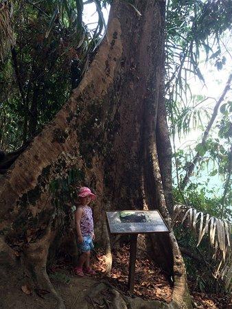 Khaolak Picture Of Khao Lak Lam Ru National Park Takua