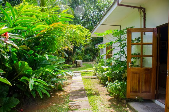 Villa Rafia Guesthouse : Walkway to the rooms