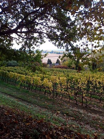 Loupiac, Fransa: Vignes avant la fin des vendanges