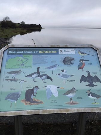 Killorglin, Irlanda: Birds, birds, birds