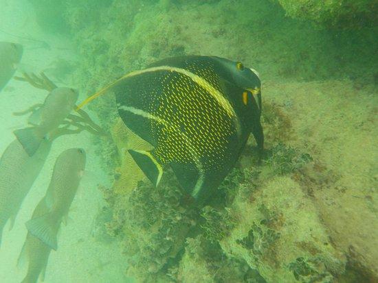 Dry Tortugas National Park, FL: Leben im Meer