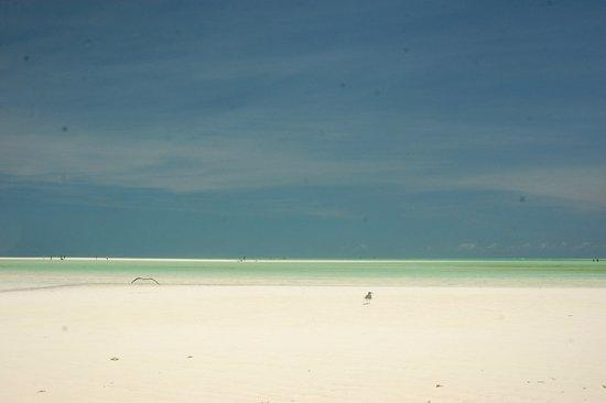 Jacaranda Beach Resort afbeelding