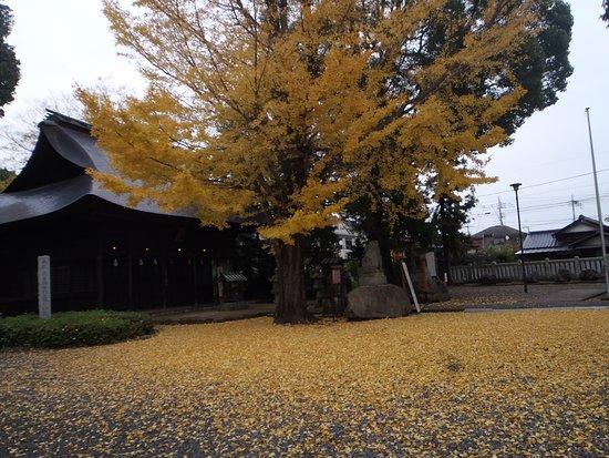Fussa, Japan: 境内の銀杏