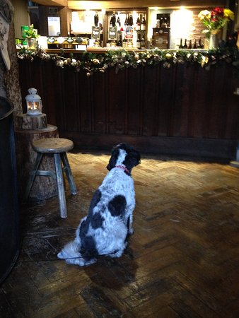 South Harting, UK: Jess considering the beer options