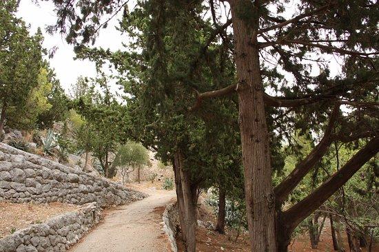 Forteca Hvar: comienza el bosque