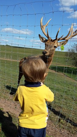 Catawissa, เพนซิลเวเนีย: Meeting Teddy, the deer that would be going to the county fair.