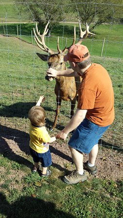 Catawissa, เพนซิลเวเนีย: Patting Teddy the deer before our tour.