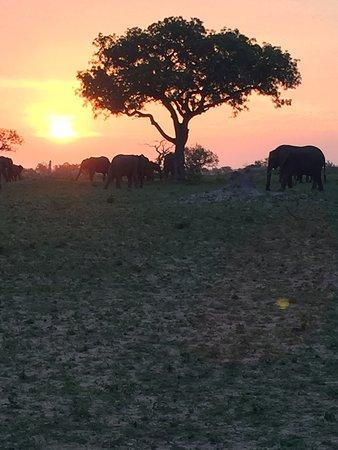 Londolozi Private Game Reserve, Afrika Selatan: photo5.jpg