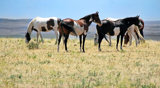The Black Hills Wild Horse Sanctuary: Black Hills Wild Horse Sanctuary july 2016