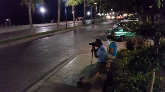 Sukasa Bungalows : Sitting on the street(Malecon) in front of the hotel with cameras ready.