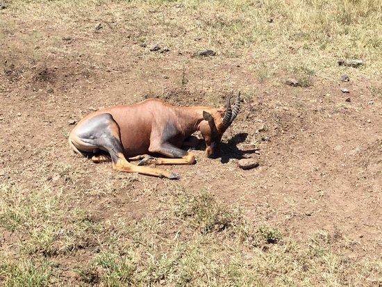 Mara Serena Safari Lodge: photo9.jpg