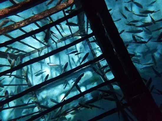 Ripley's Aquarium: 20161217_171406_large.jpg