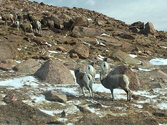 Pikes Peak: photo6.jpg