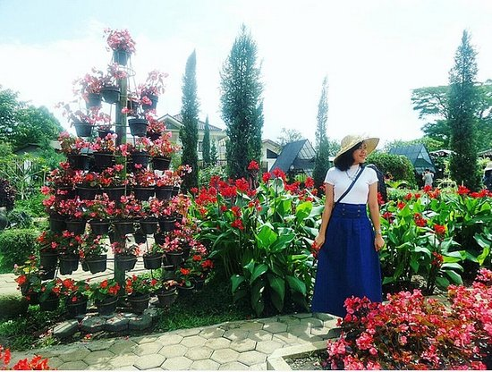 Kebun Begonia Picture Of Begonia Garden Lembang Tripadvisor