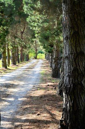 Sutton Forest Estate Wines