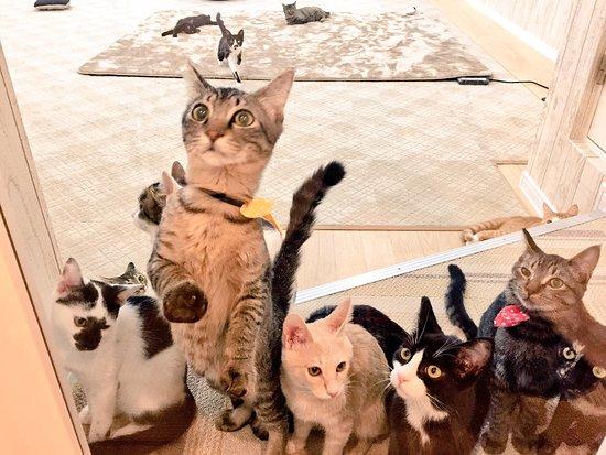 Cat Cafe Nyankuru, Kamata