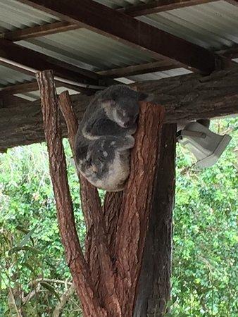 Australia Zoo: photo5.jpg