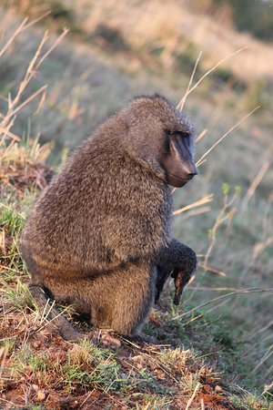 Baboons & Vervits: morning yoga..