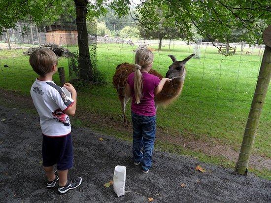 Schotten, Alemania: Das Füttern der Tiere ist immer ein schönes Erlebnis